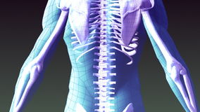 Animazione dei raggi x dello scheletro umano illustrazione vettoriale
