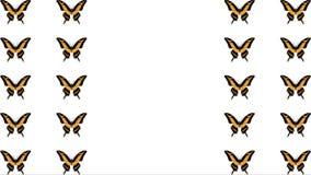 Animazione delle farfalle multicolori su fondo bianco archivi video
