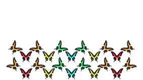 Animazione delle farfalle multicolori su fondo bianco video d archivio