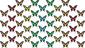 Animazione delle farfalle multicolori su fondo bianco stock footage