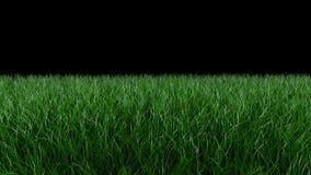 Animazione di Loopable di erba succosa verde che ondeggia nel vento Alpha Channel video d archivio