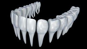 Animazione umana dei denti 3d stock footage