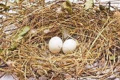 Aninhe com dois ovos   Fotografia de Stock
