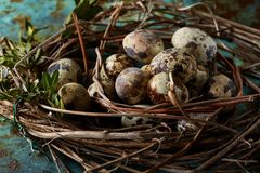 Aninhe com os ovos de codorniz no fundo azul, vista superior, close-up, foco seletivo Imagens de Stock Royalty Free