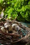 Aninhe com os ovos de codorniz no fundo azul, vista superior, close-up, foco seletivo Imagem de Stock Royalty Free