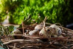 Aninhe com os ovos de codorniz no fundo azul, vista superior, close-up, foco seletivo Foto de Stock Royalty Free