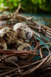 Aninhe com os ovos de codorniz no fundo azul, vista superior, close-up, foco seletivo Fotografia de Stock
