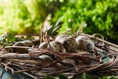 Aninhe com os ovos de codorniz no fundo azul, vista superior, close-up, foco seletivo Fotografia de Stock Royalty Free