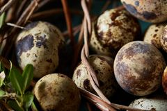 Aninhe com os ovos de codorniz no fundo azul, vista superior, close-up, foco seletivo Fotos de Stock