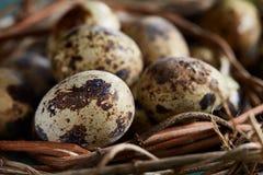 Aninhe com os ovos de codorniz no fundo azul, vista superior, close-up, foco seletivo Imagem de Stock