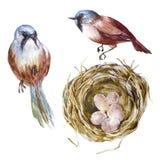 Aninhe com ovos, um par pássaros, vuntage ilustração royalty free