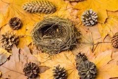 Aninhe vazio no fundo outonal com folhas de bordo e os cones de abeto caídos outono no ar Atributos do outono naughty fotos de stock royalty free