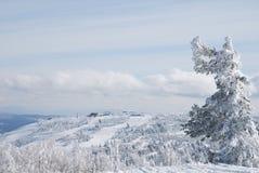 anioła drzewo Obraz Royalty Free