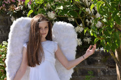 Anioł dziewczyna Fotografia Stock