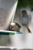 Anioła ptak Zdjęcia Stock