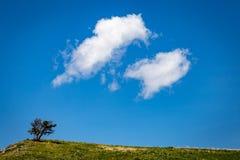 Anioł uskrzydla przy Modlitewnym drzewem Zdjęcia Royalty Free