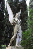 Aniołeczka anioł Obraz Stock
