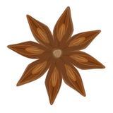 Anis de estrela, vektor Imagem de Stock