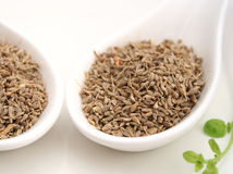 Anis seeds royalty free stock photography