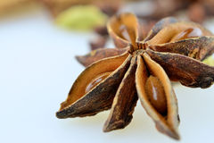Anise. Brown anise star, seed on white background Stock Images