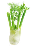 Anise Fennel Stock Photo