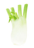 Anise Fennel Plant Royalty Free Stock Image