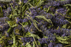 Anise hyssop. Agastache foeniculum. Already dried to make relaxing tea royalty free stock image