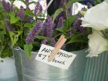 Anise Hyssop bunches for sale. Anise Hyssop at the farmers market royalty free stock photos