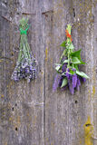 Anise hyssop and lavender bunch on old wooden wall royalty free stock photography