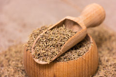 Anise Seeds Royalty Free Stock Images