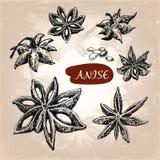 Anise. Stock Image