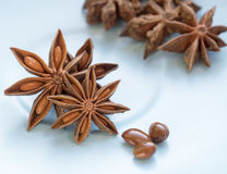 Anise star and seeds Stock Photo