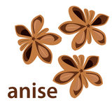 Anise star Stock Photo