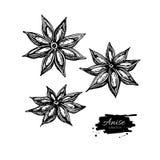 Anise Star Vector-tekening Hand getrokken schets Seizoengebonden voedselillu Royalty-vrije Stock Afbeeldingen