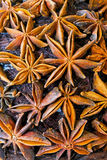 Anise texture Stock Image