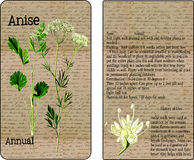 Anise Vintage Seed Packet Images libres de droits