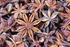 Aniseed Royalty Free Stock Images