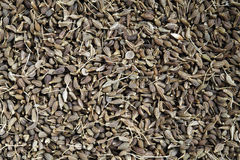 Aniseed as background Stock Image