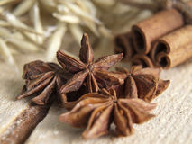 Aniseed tree  and cinnamon Stock Images