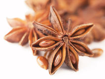 Anisetree anise. Whole Star Anise isolated on white background with shadow Stock Images