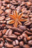 The anisetree lying in arabica coffee grains. Stock Photos