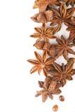 Anisetreeanijsplant Royalty-vrije Stock Fotografie