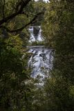 Aniwaniwa nedgångar som döljas i skog Arkivbild