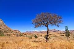 Anja reserve tree Stock Photos