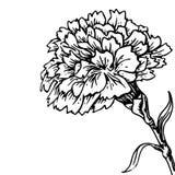 Anjerbloem - schets van tatoegering Stock Afbeeldingen