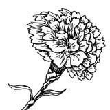 Anjerbloem - schets van tatoegering Royalty-vrije Stock Fotografie