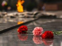 Anjersbloemen op het monument van eeuwige brand - Victory Day stock foto's