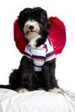 Anjo do cão Imagens de Stock Royalty Free