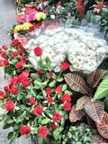 Ankara blommor Fotografering för Bildbyråer