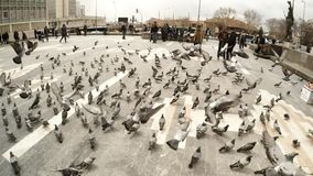 POV great numbers of pigeons on square capital of Turkey. Ankara capital of Turkey Cityscape early spring stock video footage